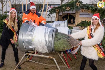Weihnachtsbaum Expertentipps