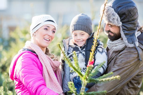 Das Regensburger Christbaumverkauf Erlebnis