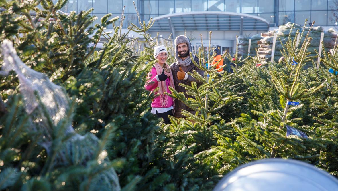 Weihnachtsbäume Regensburg 2019